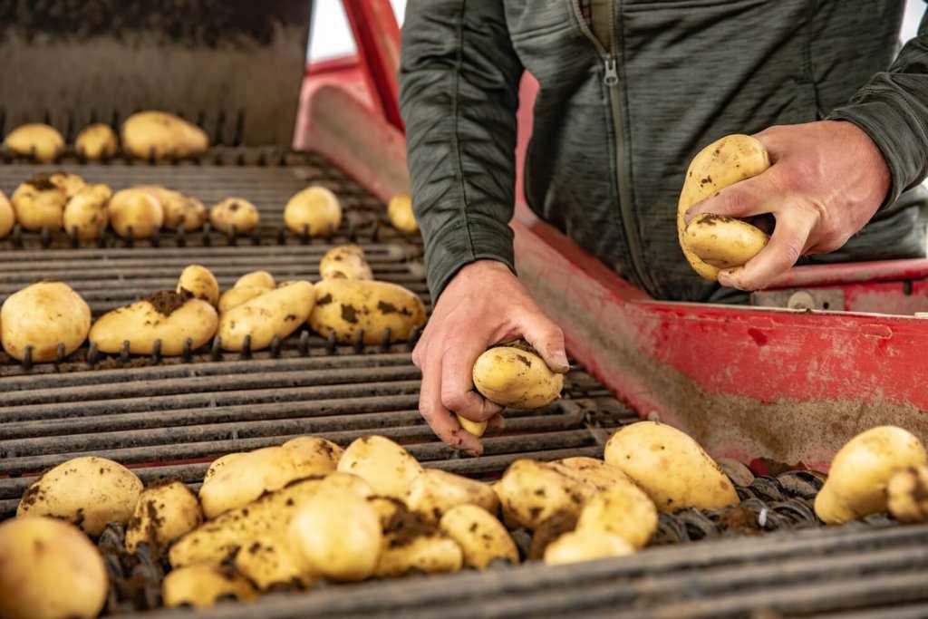 Bauernhof, Bauer, Kartoffelanbau, Wirtschaft, Industrie, Süddeutschland, Fotograf, Fotografin, Reportagefotografie, Corporate Fotografie, Unternehmensfotografie, Editorial Fotografie